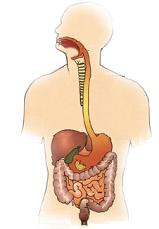 test del aparato digestivo