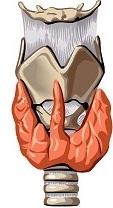 test del tiroides y paratiroides